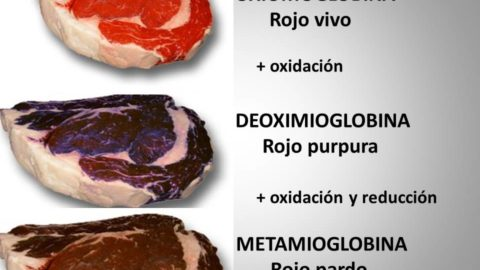 El color de la carne, y sus causas.