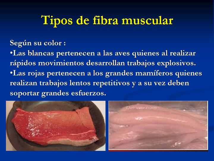 Tipos de fibra muscular según color